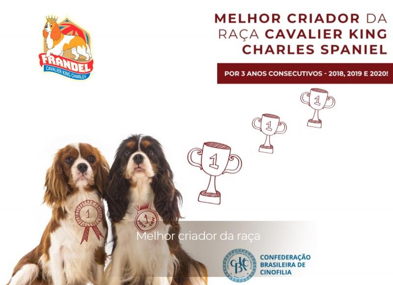 Onde comprar um Cavalier King Charles Spaniel?