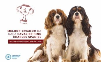 Melhor criador da raça Cavalier King Charles Spaniel em 2020