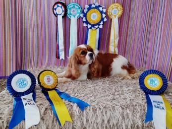Nosso Canil é o melhor no Ranking CBKC e Ranking Dog Show